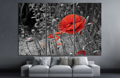 A closeup of a red poppy on a black and white background №2752 Ready to Hang Canvas Print