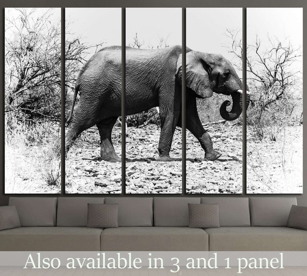 African elephant walks in the bush (Chobe National Park, Botswana) №1846 Ready to Hang Canvas Print