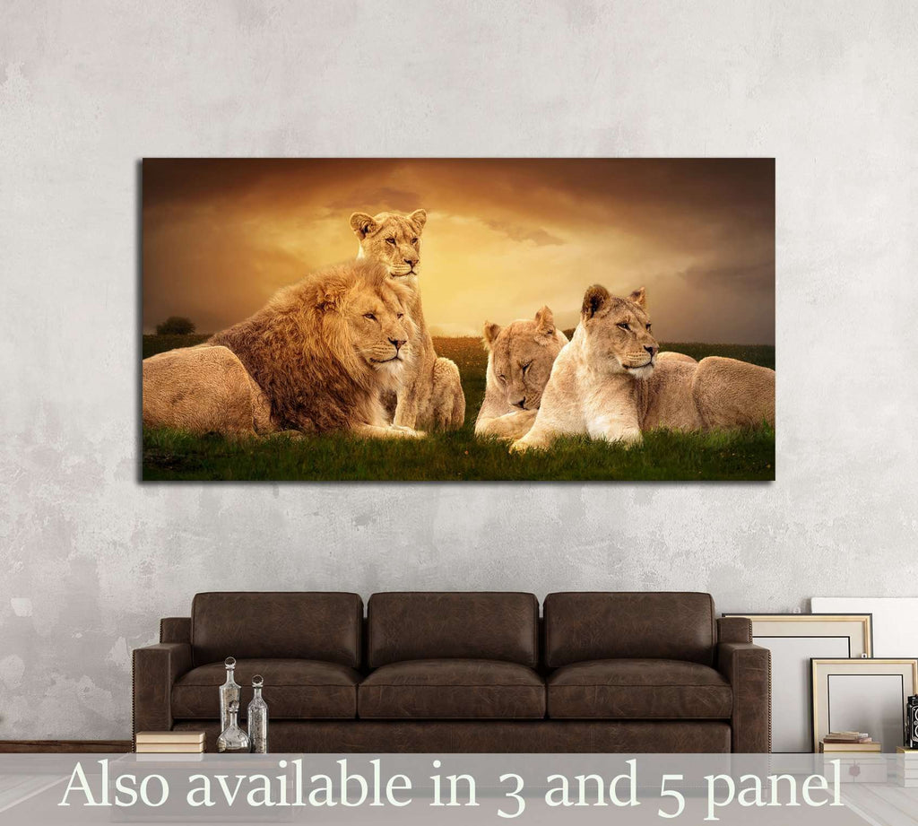 African lions resting at sunset in the grass №2370 Ready to Hang Canvas Print