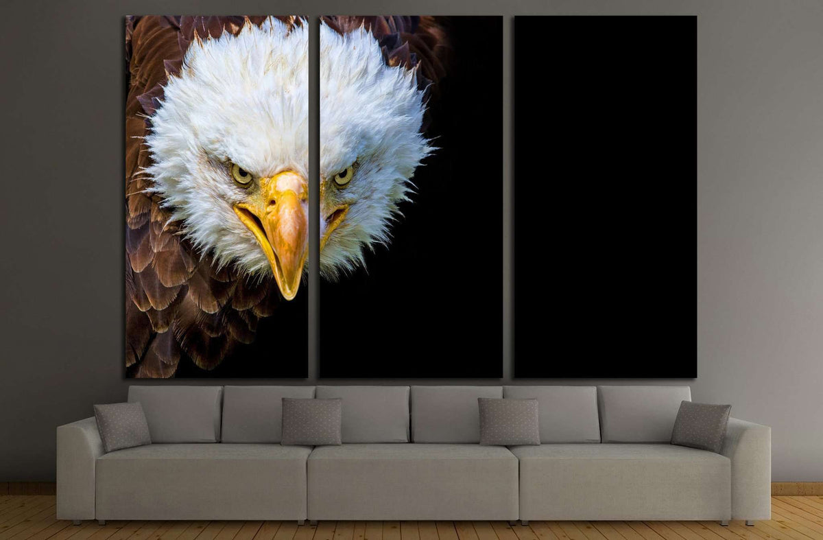 Angry North American Bald Eagle On Black Background №1863