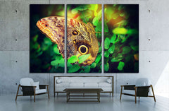 Beautiful butterfly №2798 Ready to Hang Canvas Print