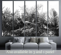 beautiful palms leaf on white background №3273 Ready to Hang Canvas Print