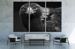 black and white photo of a golden eagle in captivity in a zoo №2794 Ready to Hang Canvas Print