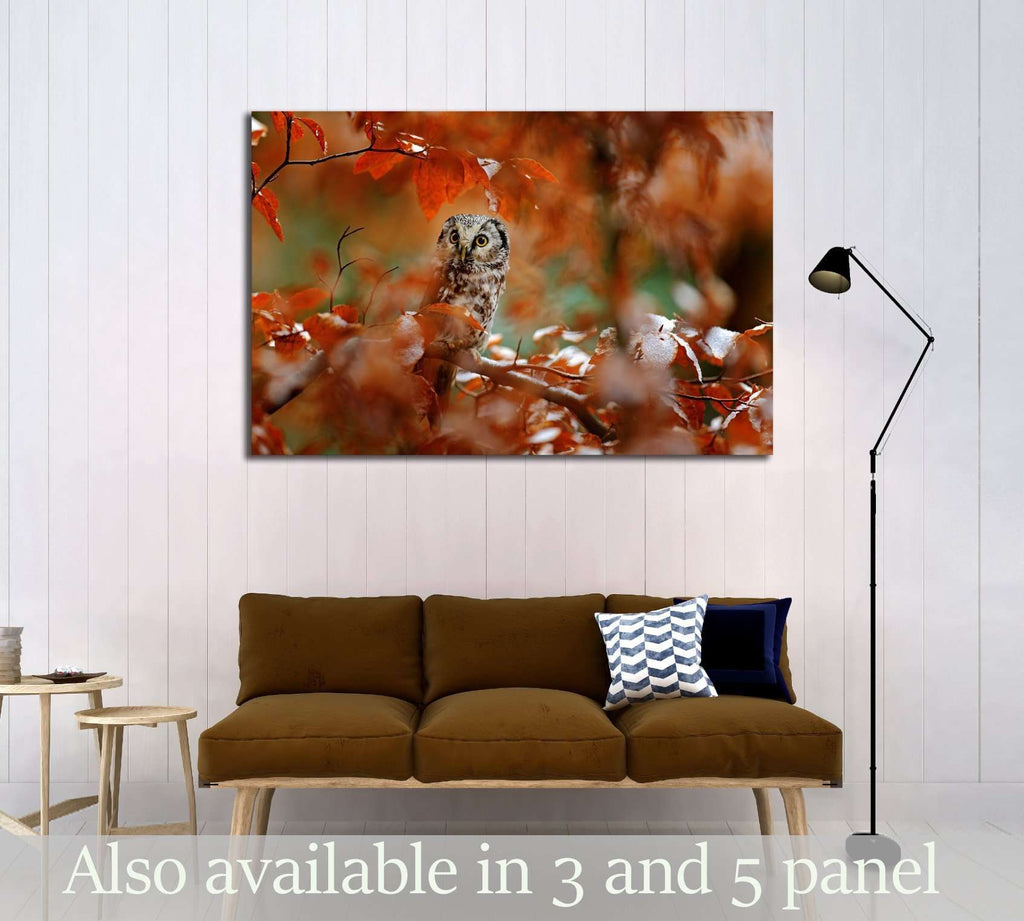 Boreal owl, Aegolius funereus, in the orange larch autumn forest in central Europe №2801 Ready to Hang Canvas Print