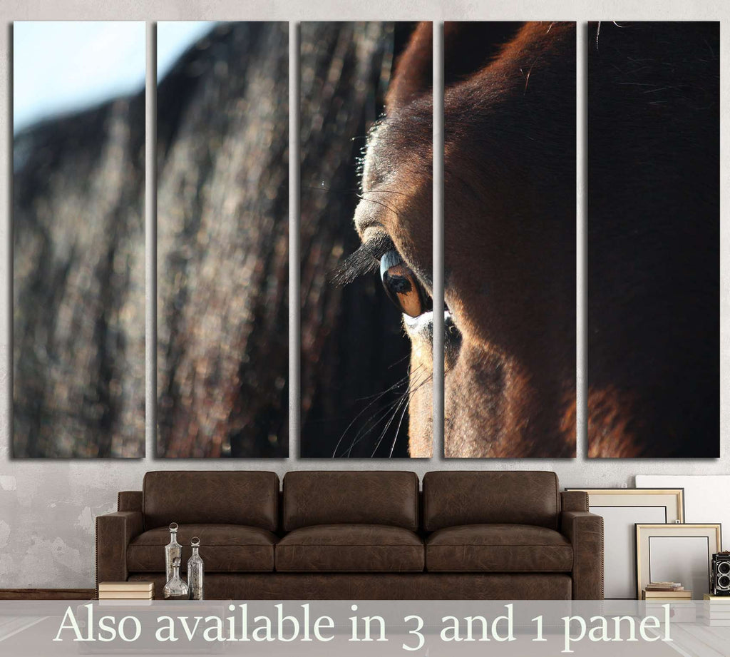 Brown horse eye close up №1841 Ready to Hang Canvas Print
