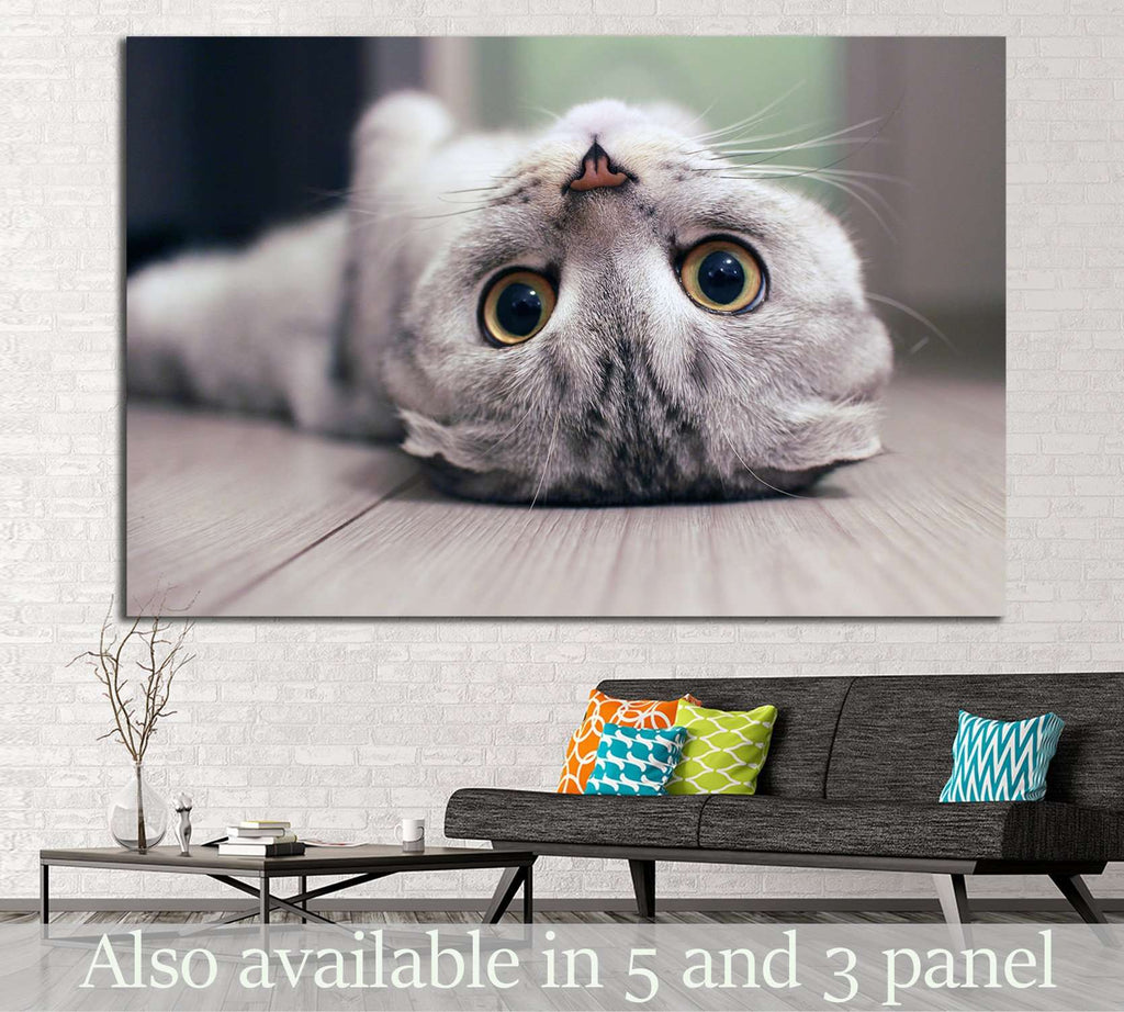 Cat lying on the floor №11 Ready to Hang Canvas Print
