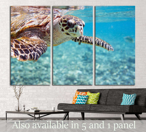 Close up of Hawksbill sea turtle swimming in Indian ocean in Seychelles №2337 Ready to Hang Canvas Print