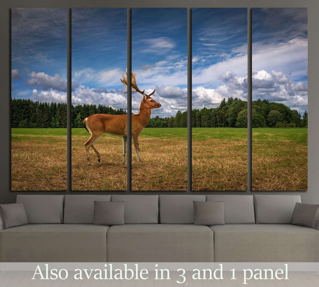 Deer in a Field №2361 Ready to Hang Canvas Print