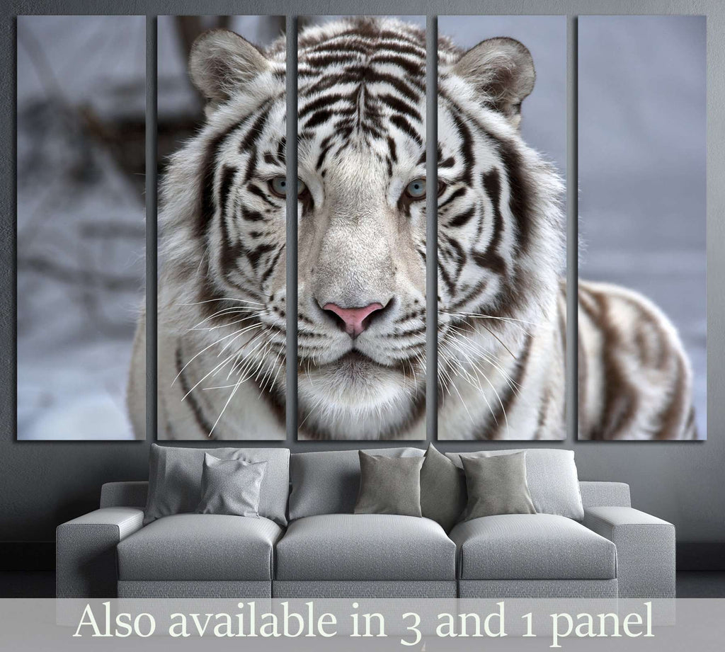 Face to face with white bengal tiger №2345 Ready to Hang Canvas Print