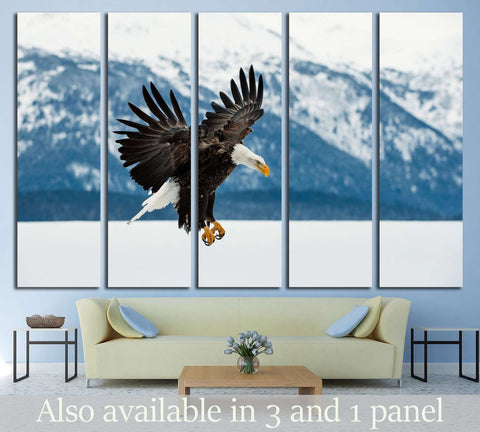 Flying bald eagle, Winter Alaska. USA №1858 Ready to Hang Canvas Print