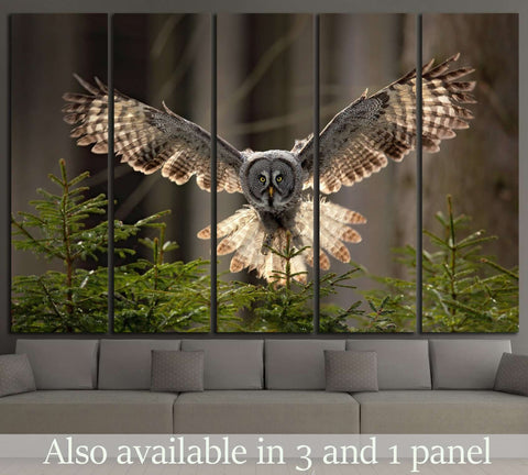 Flying Great Grey Owl, Strix nebulosa №1331 Ready to Hang Canvas Print