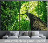 forest trees №615 Ready to Hang Canvas Print