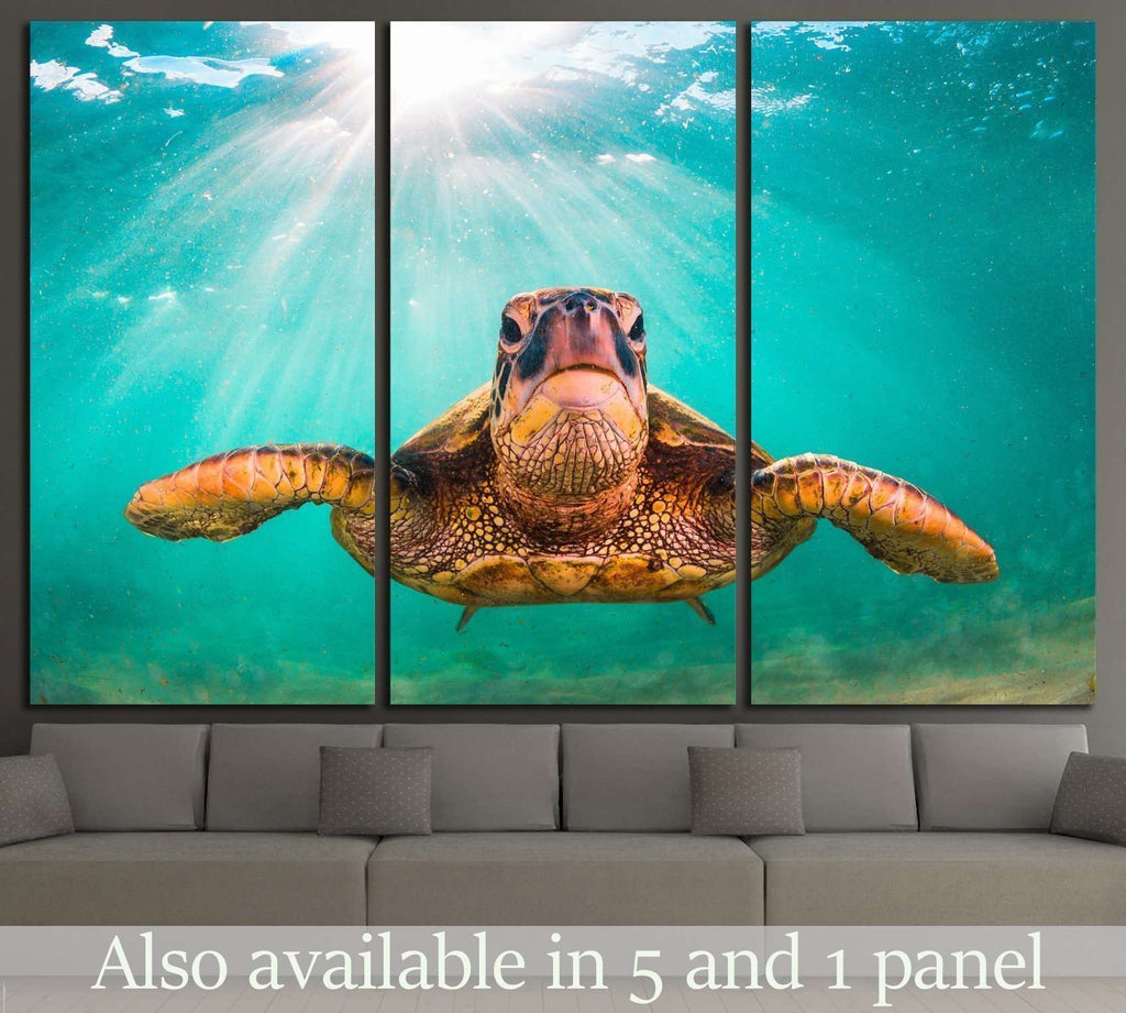 Hawaiian Green Sea Turtle, Pacific Ocean in Hawaii №1859 Ready to Hang Canvas Print