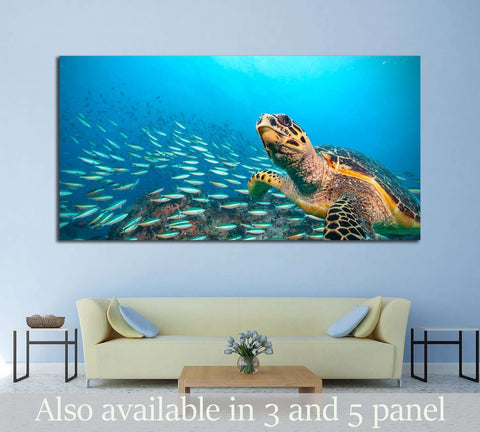 Hawksbill Sea Turtle flowing in Indian ocean, flock of fish on background №2366 Ready to Hang Canvas Print