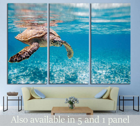 Hawksbill sea turtle swimming in Indian ocean in Seychelles №2336 Ready to Hang Canvas Print