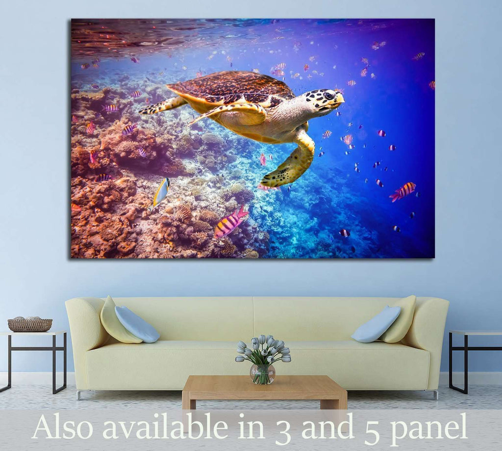 Hawksbill Turtle, Maldives, Ocean coral reef №1398 Ready to Hang Canvas Print