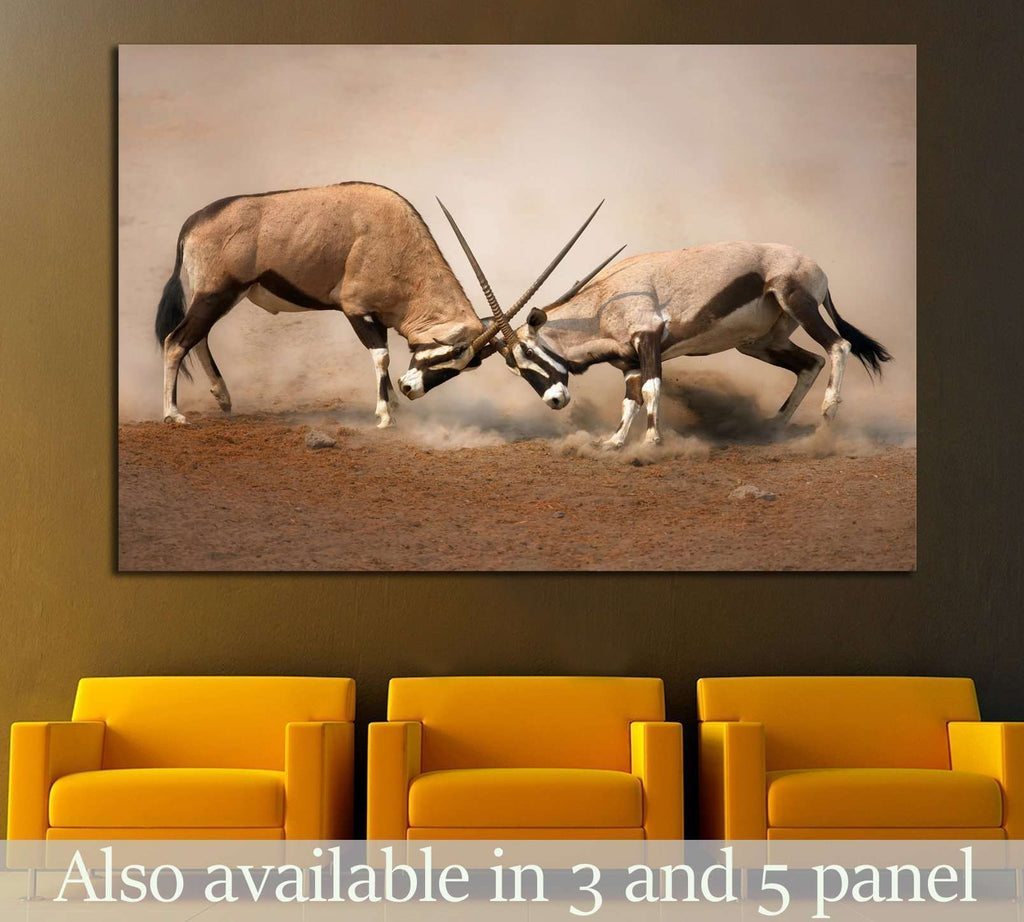 Intense fight between two male Gemsbok on dusty plains of Etosha №1838 Ready to Hang Canvas Print