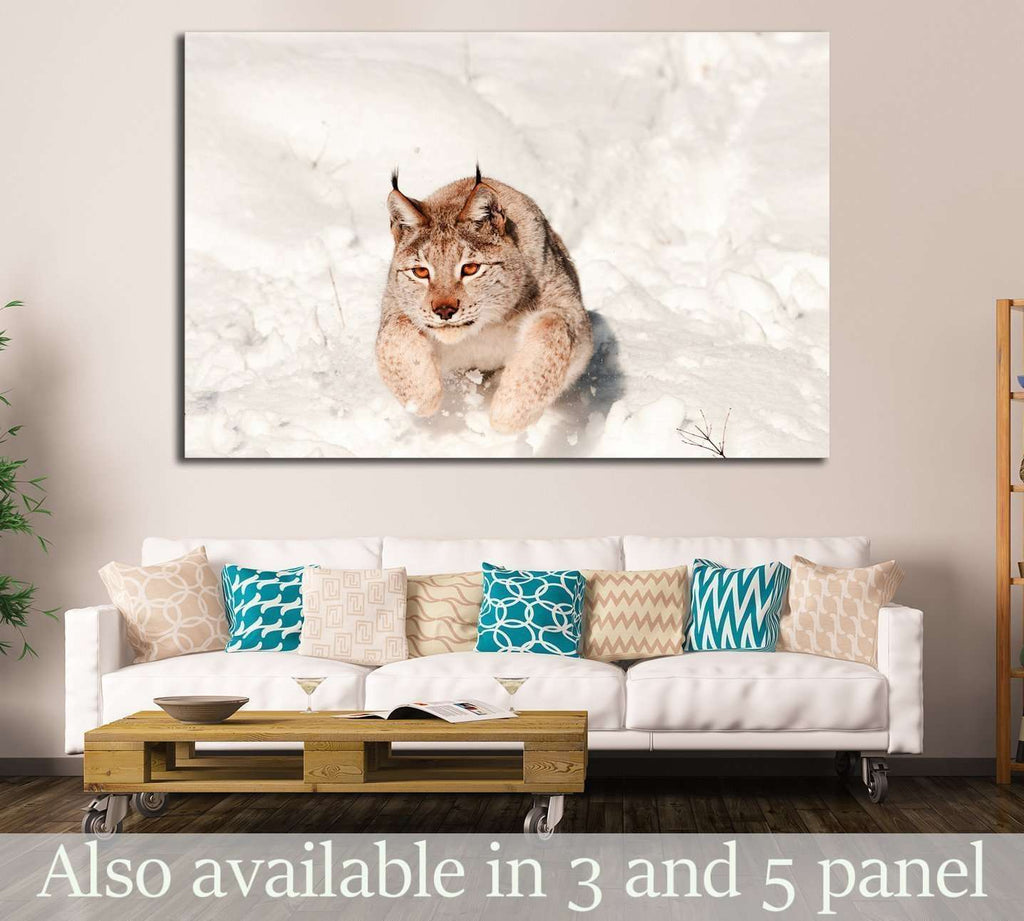 Lynx jumping in fresh snow №1839 Ready to Hang Canvas Print