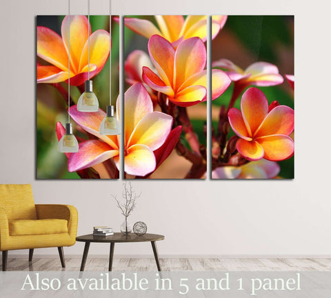 Plumeria. Beautiful pink inflorescence. №2556 Ready to Hang Canvas Print