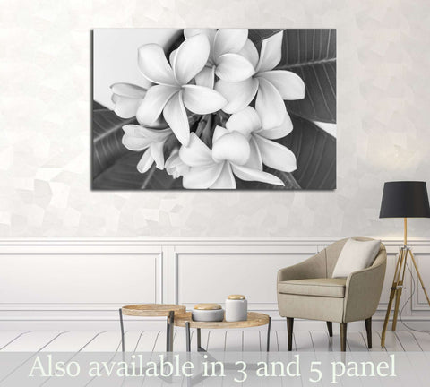 Plumeria or frangipani flower, Tropical flower . Black and white photography. №2839 Ready to Hang Canvas Print