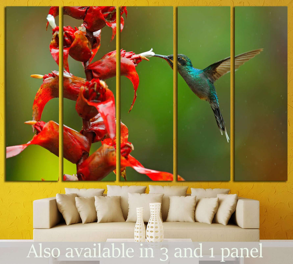 Rare hummingbird from Costa Rica №1445 Ready to Hang Canvas Print
