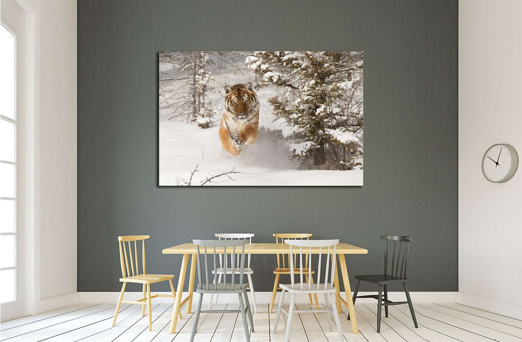 Rare Siberian Tiger running in snow between trees №2344 Ready to Hang Canvas Print