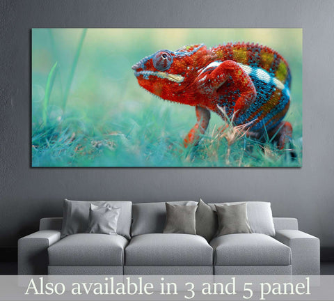 reptile, reptiles, chameleon, macro, animal, animals, indonesia №2377 Ready to Hang Canvas Print
