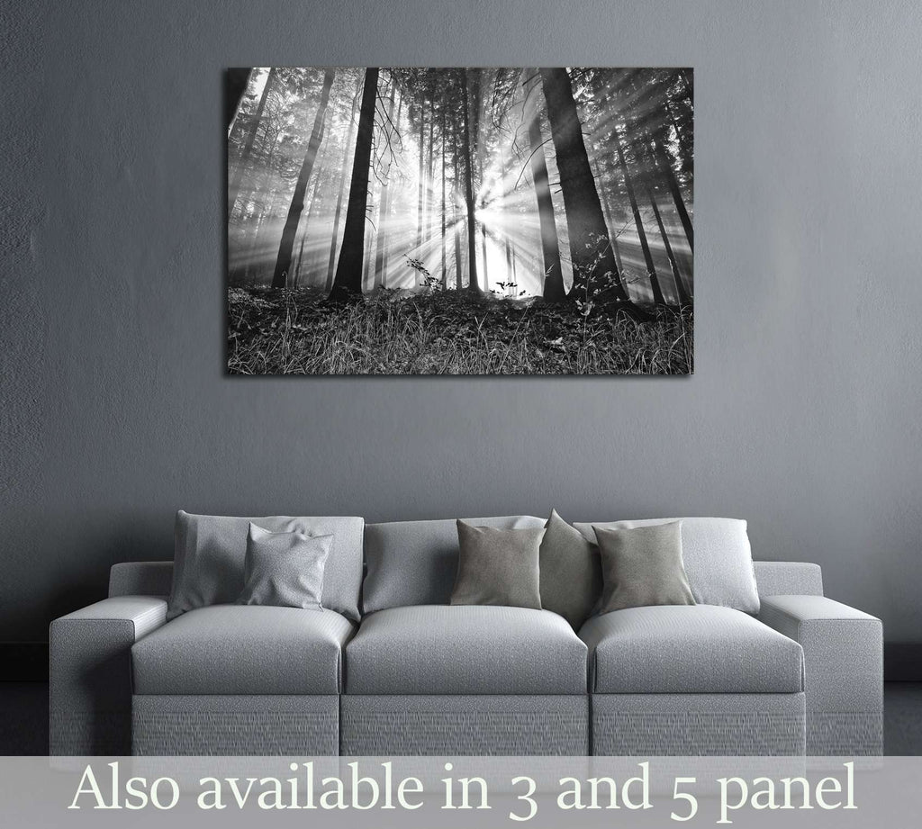 sunrise in a forest №2687 Ready to Hang Canvas Print