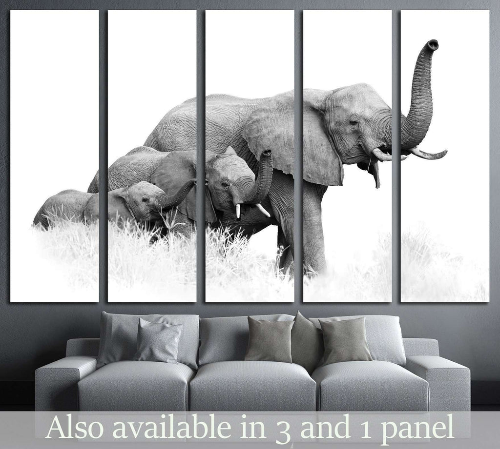 three African Bush Elephants, Loxodonta africana, Kruger, SA №1834 Ready to Hang Canvas Print
