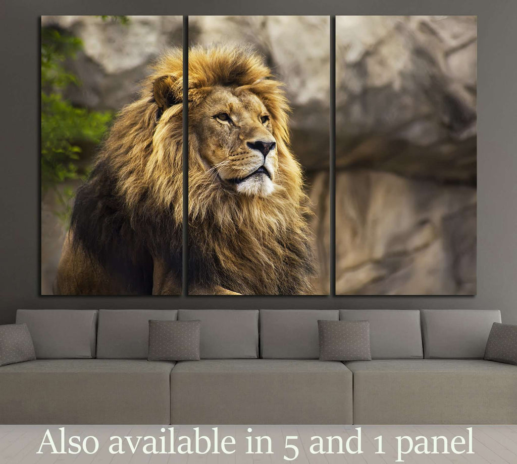 Wild Lion №186 Ready to Hang Canvas Print