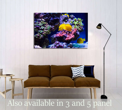 Wonderful and beautiful underwater world with corals №3067 Ready to Hang Canvas Print