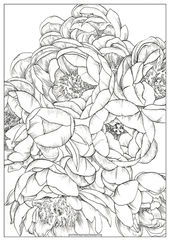 coloring pages polina bright