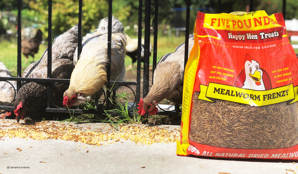 Happy Hen Treats - Backyard Chicken Treats, Chicken Supplies, Mealworms and more.