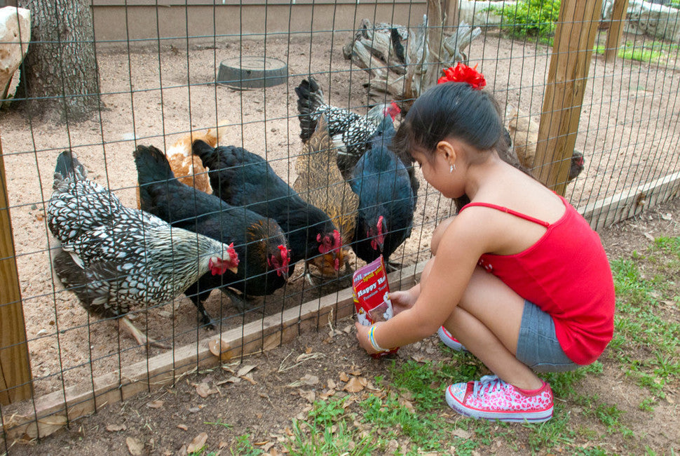 Chickens love Happy Hen Treats and Mealworm Frenzy!