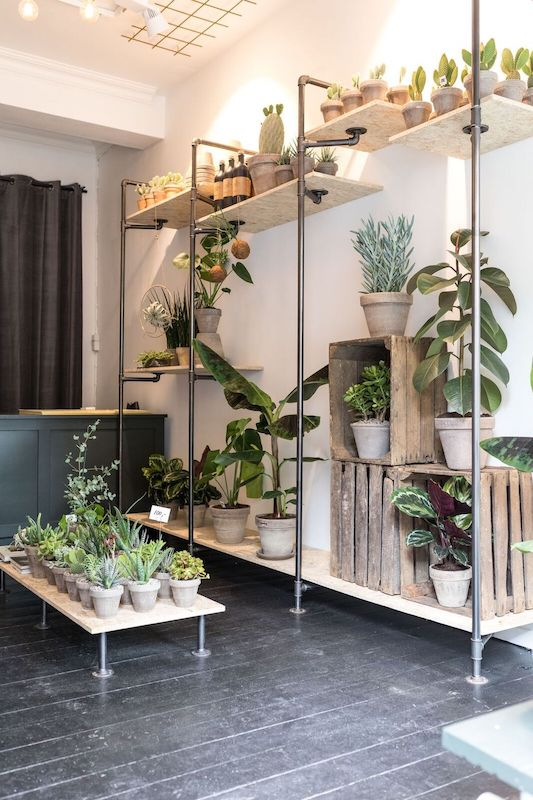 Custom plant rack made from iron pipes and wood