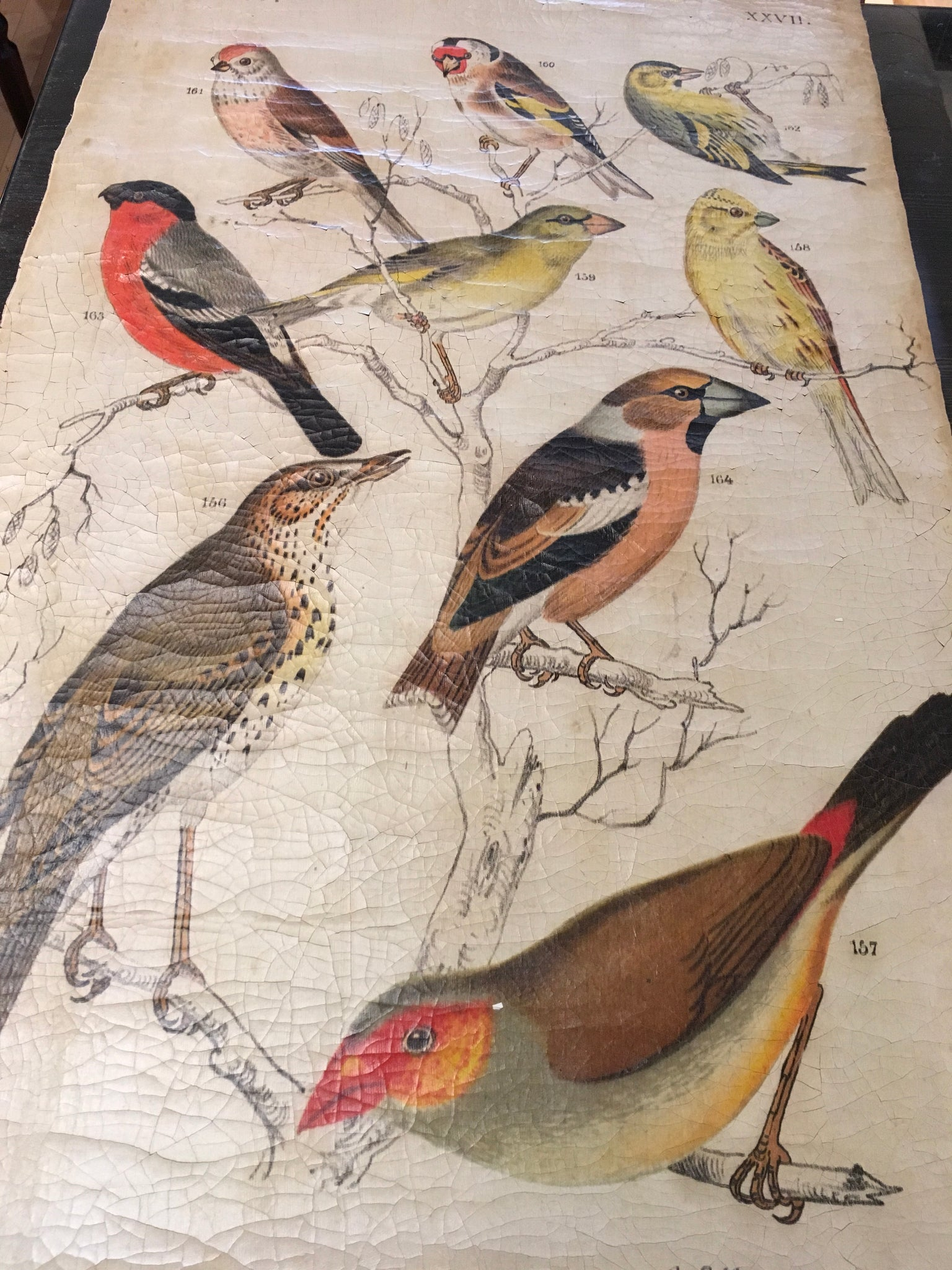 Bird Art on cracked canvas
