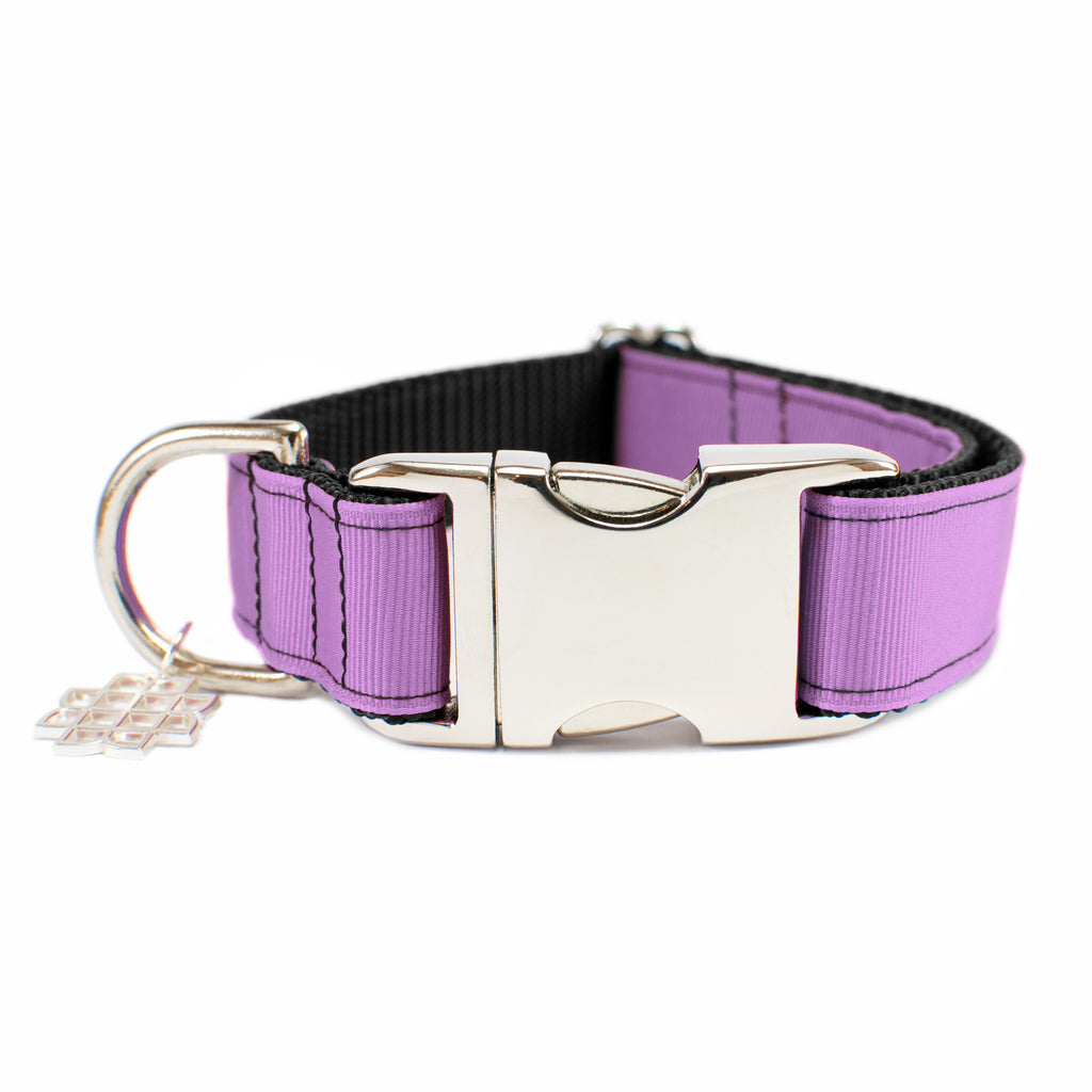 Wild Orchid Purple Collar