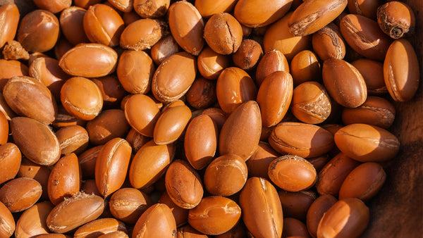 Argan oil is extracted from kernels found in the fruits of argan tree.