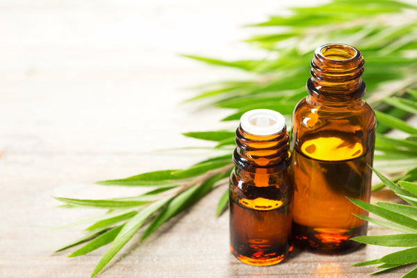 Tea Tree Oil is known to treat pimples and give nourishment for your hair.