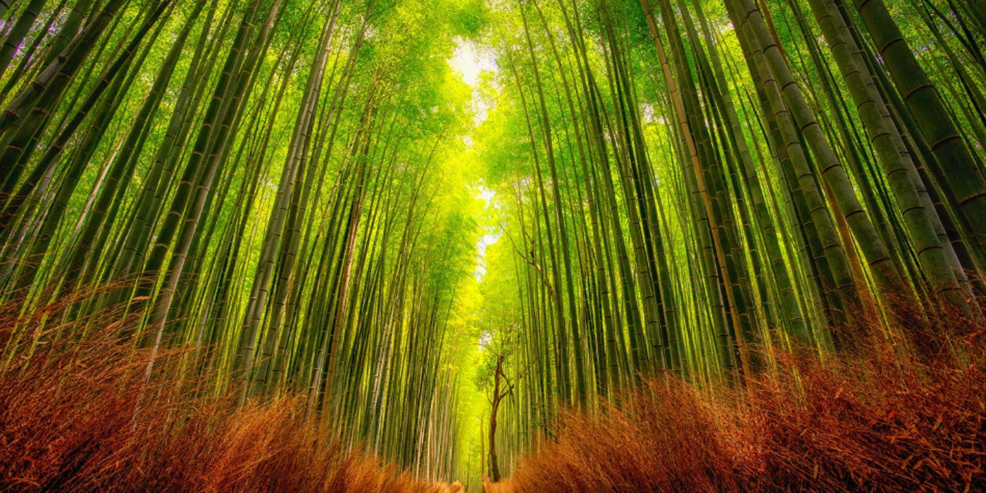 Bamboo, eco wood, bamboo properties, sustainable wood, bamboo is a grass