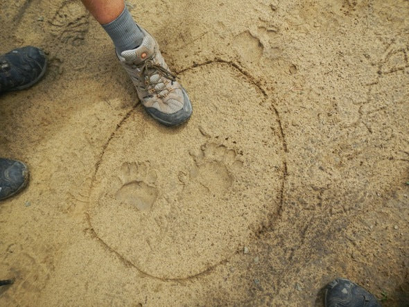 Bear Prints Philmont