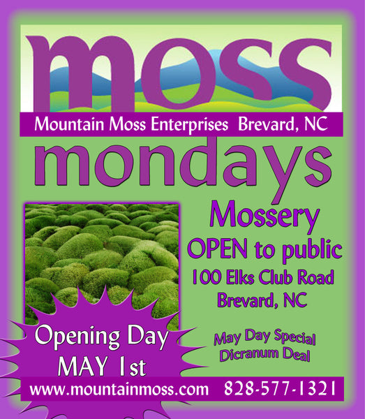 Mossery Re-opens May 1, 2017