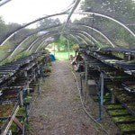 Mountain Moss-Container Production-Cold Frame