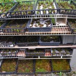 Mountain Moss-Moss Cultivation-Shelves