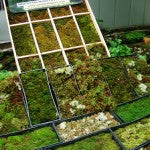 Mountain Moss-Green Roof research