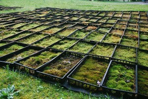 Mountain Moss-Mossery Container Production