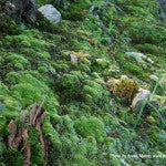 MountainMoss_Landscape_002_WEB