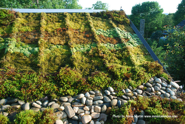 MountainMoss_Landscape_GreenRoof_001_WEB