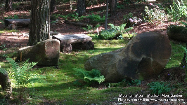 MountainMoss_MadisonYearLater_0001_WEB