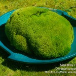 MountainMoss_Moss4Day14_Dicranum_GiantMound_WEB